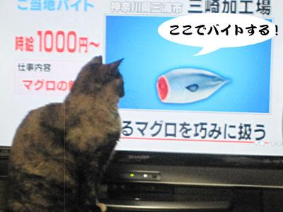 13_03_13_3.jpg