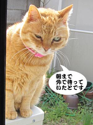 13_03_25_3.jpg