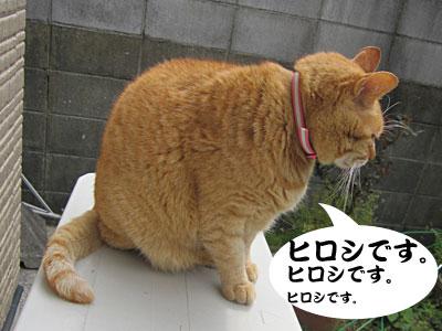 13_04_10_2.jpg