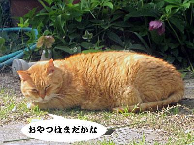 13_04_18_4.jpg