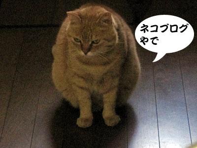 13_04_28_4.jpg