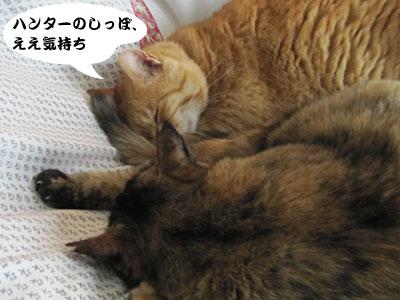 13_05_04_5.jpg