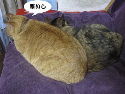 13_10_20_2.jpg