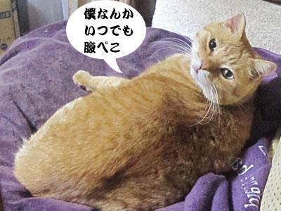 13_11_01_3.jpg