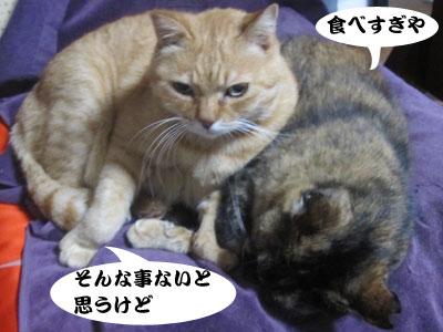 13_11_04_3.jpg
