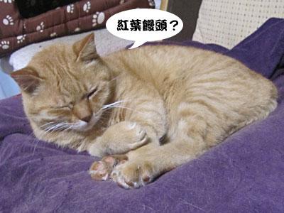 13_11_09_3.jpg