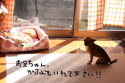 IMG_4592.jpg