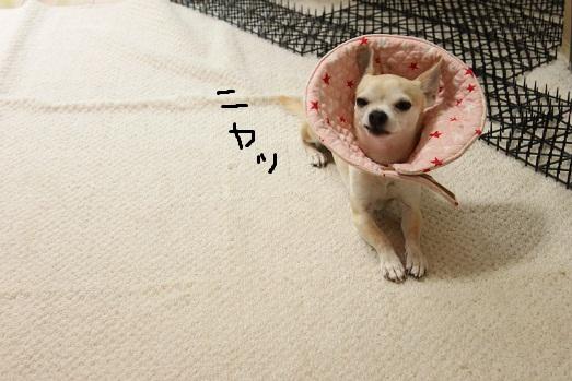 IMG_6131_20120720091018.jpg