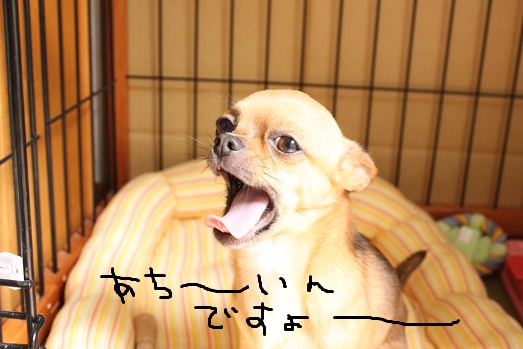 IMG_6298.jpg