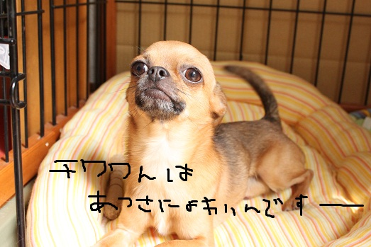 IMG_6299.jpg