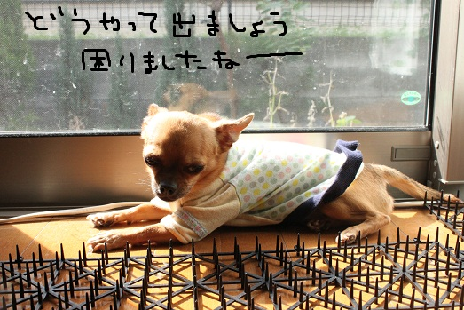 IMG_7207.jpg