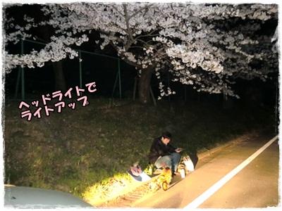 2012夜桜1