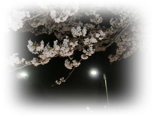 2012夜桜7