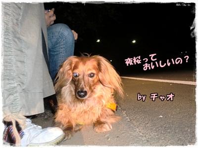 2012夜桜3