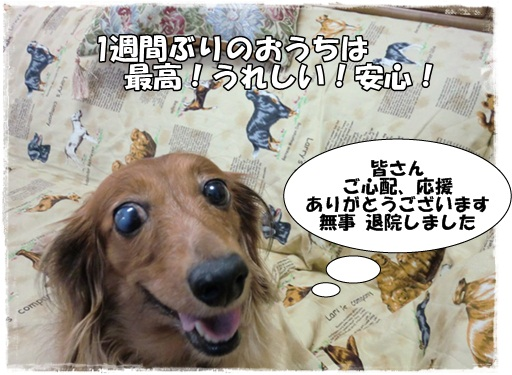 包帯犬だぜぇ1