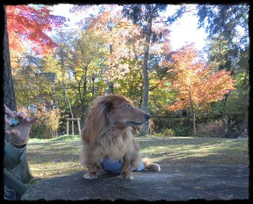 紅葉狩り2