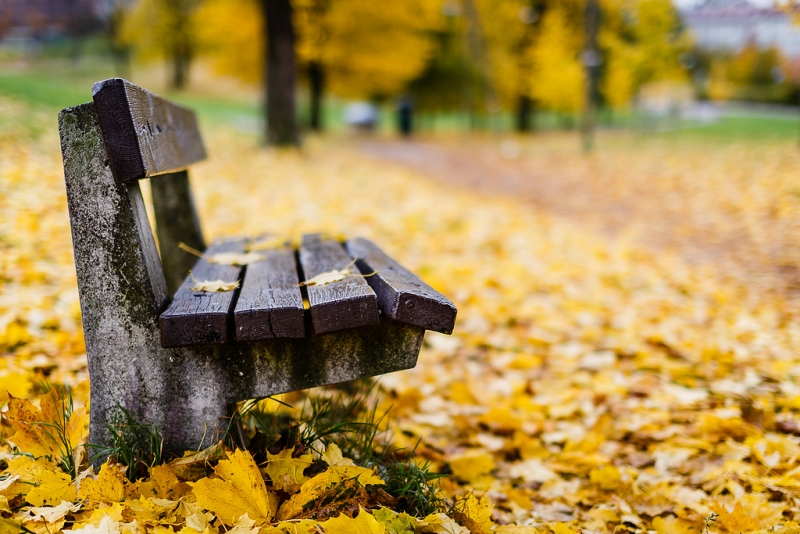 autumn-bokeh14-11-16-2.jpg
