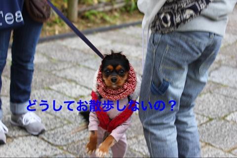 fc2blog_20141206202509f76.jpg