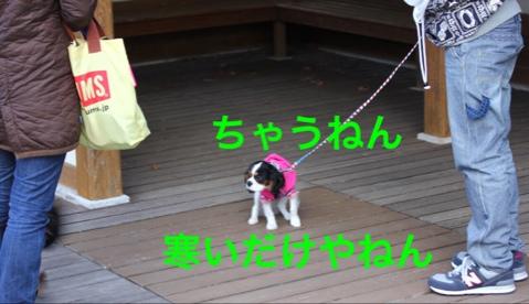 fc2blog_20141206202651d5a.jpg