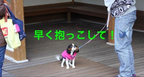 fc2blog_2014120620271625d.jpg