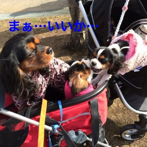 fc2blog_20141208122538220.jpg
