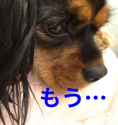 fc2blog_2014121621524448c.jpg