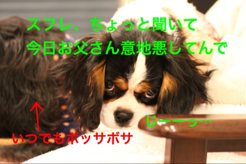 fc2blog_2014122121581580f.jpg