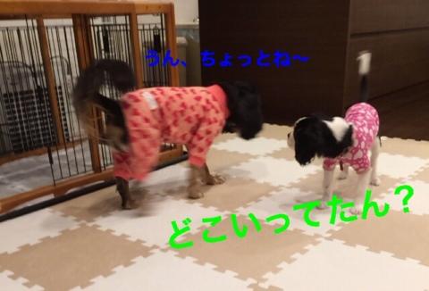 fc2blog_20141222192009675.jpg