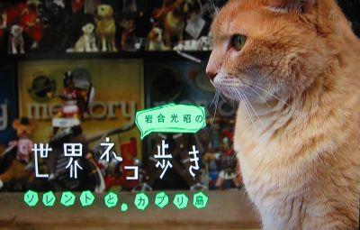 岩合光昭の世界ネコ歩き 「ソレントとカプリ島」