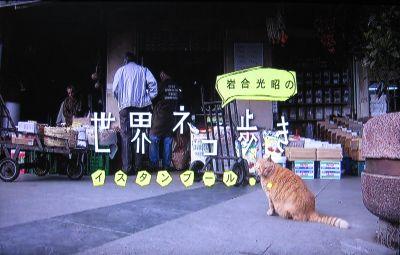 岩合光昭の世界ネコ歩き「イスタンブール」