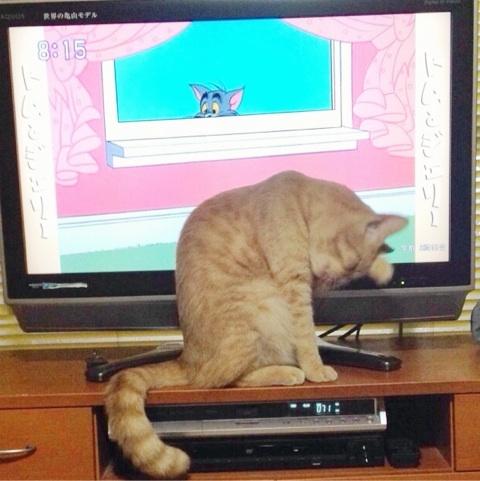 トムとうちの猫
