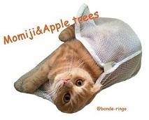 ぼんでりんご