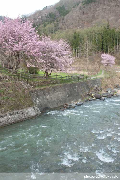 長野県 白馬 観光 大出の吊橋 レンタサイクル 散策 白馬駅 写真15