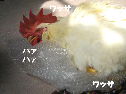 ni-201.jpg