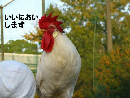 ni-45_20131027220154c36.jpg