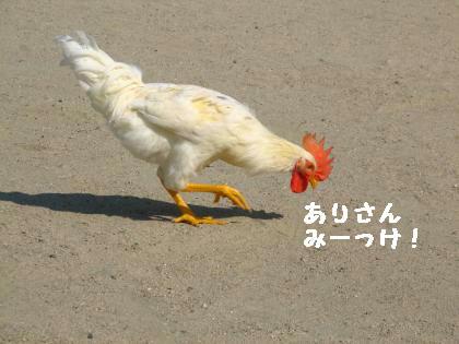 ni-50_20130608223311.jpg