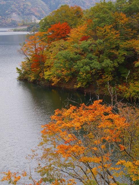 131106徳山湖-4