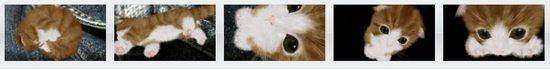 PSVita トロフィー厨歓喜 ゴールドが簡単に取れる猫ゲー Aabs Animals(アーヴズ・アニマルズ)