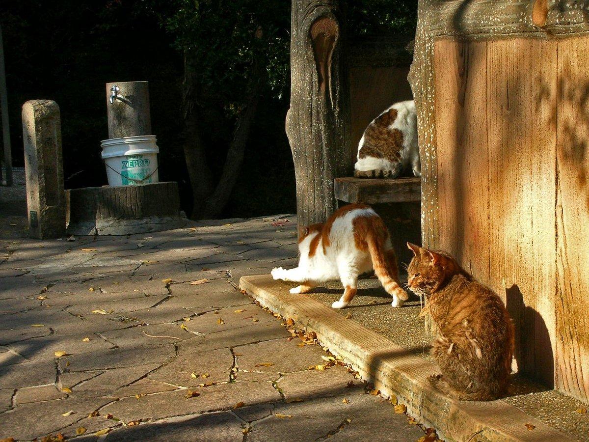 布引の滝の猫
