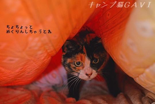141207_2204a.jpg