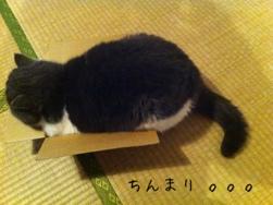 fc2blog_201303302053186e6.jpg