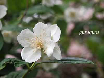 12sumiyosi51.jpg