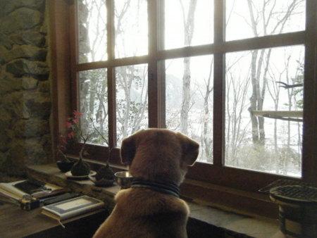 窓の外を見るらく