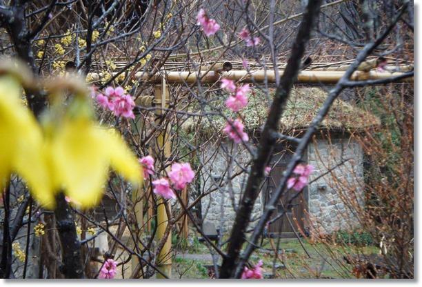 竹パーゴラ後氏の石積みの小屋