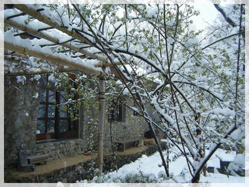 キモッコウバラと竹パーゴラと雪