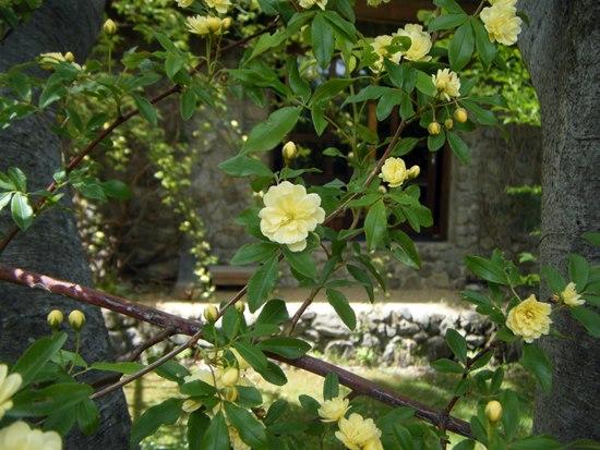 花越しの石壁