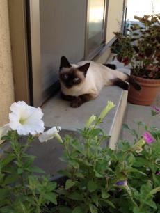 猫130918-4_convert_20130918145202