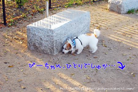 130417_dogrun1.jpg