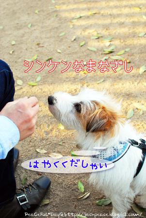 130417_dogrun10.jpg