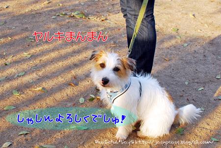 130417_dogrun2.jpg